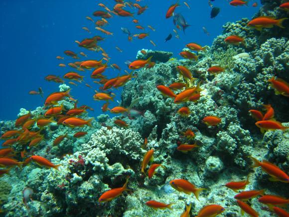 http://beneath.cowblog.fr/images/20080414plongeesgiftun074.jpg